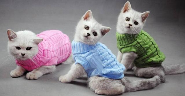 Нужна вязальщица в Берлине для пошива свитеров котикам