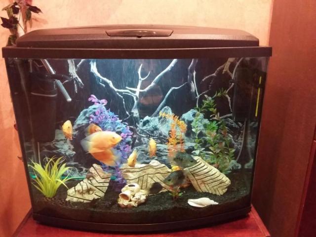 продам аквариум 120 литр в Берлине