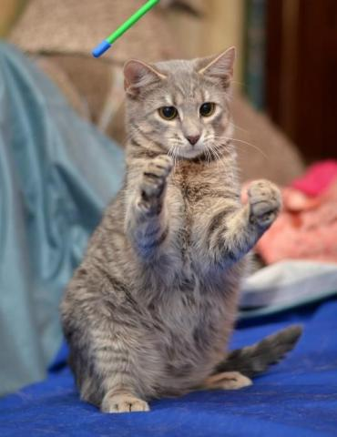 2-летнего кот Вискас