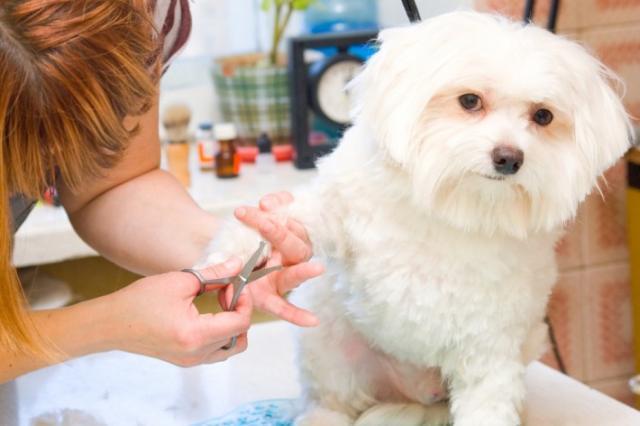 стрижки кошек и собак разных пород по умеренным ценам