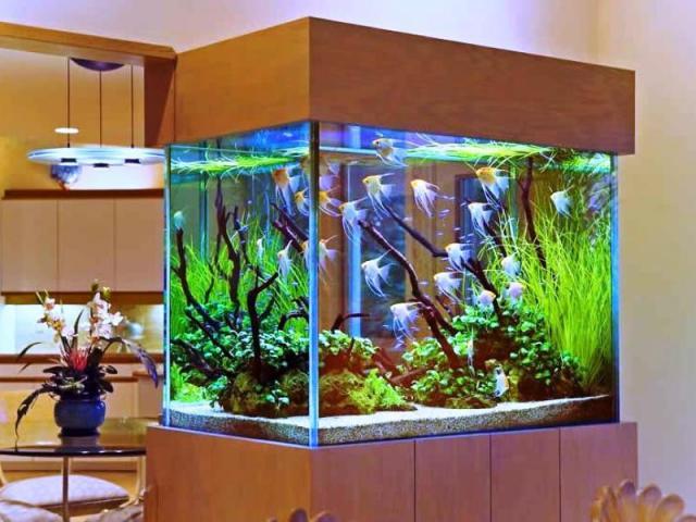 Обслуживание аквариумов в Берлине