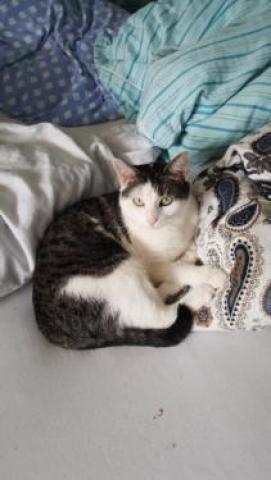 молодой Кот ищет нового хозяина